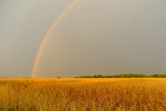 Rainbow in corn field Royalty Free Stock Photos