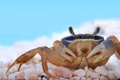 Rainbow crab Royalty Free Stock Image