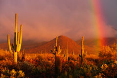 Rainbow del deserto Fotografia Stock Libera da Diritti