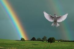 Rainbow and the Dove. Rainbows above rural land with a white dove in flight Stock Photo