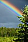 Rainbow ed albero Fotografie Stock Libere da Diritti