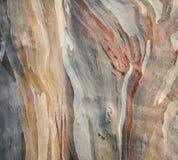 Rainbow eucalyptus tree bark Royalty Free Stock Images