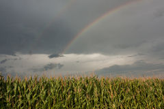 Rainbow. Fantastic rainbow on a field in Zurich Stock Images