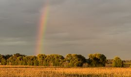 Rainbow Fields. Grey cloudy sky with a rainbow over a feild of maze royalty free stock photo