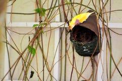 Rainbow Finch bird in aviary, Florida Royalty Free Stock Image