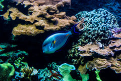 Rainbow fishes in an aquarium in a zoo Stock Photos