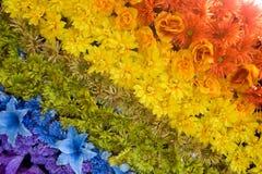 Rainbow floreale Fotografie Stock