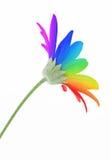 Rainbow flower Royalty Free Stock Image