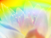 Rainbow Flower Background Stock Photo