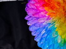 Rainbow flower Stock Photos