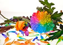Rainbow flower Stock Image