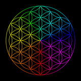 Rainbow flower of life. Symbol of sacred geometry Royalty Free Stock Images
