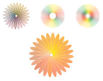 Rainbow flowers Royalty Free Stock Photography