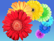 Rainbow of flowers Royalty Free Stock Photos