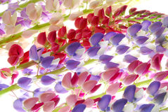 Rainbow of flowers. A row of rainbow colored flowers in purple, pink, red, blue and ivory Stock Photo
