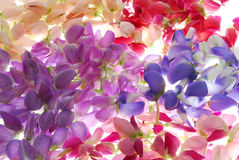 Rainbow of flowers Royalty Free Stock Images