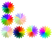 Rainbow flowers Stock Photo