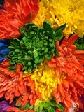Rainbow of flowers. Rainbow bouquet of flowers anniversary gift love bouquet celebrating Stock Photo