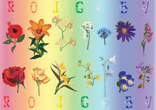 Rainbow flowers collection Royalty Free Stock Images