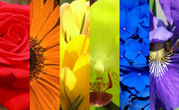 Rainbow Flowers Royalty Free Stock Photography