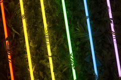Rainbow of Fluorescent Light Tubes on Greenery Royalty Free Stock Image