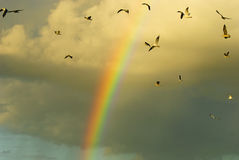 Rainbow and flying birds Royalty Free Stock Photos