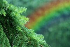 Rainbow in forest. A closeup of the leaves on a tree with a rainbow in the background in a raining forest stock photography