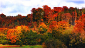 Rainbow forest - autumn Royalty Free Stock Image