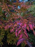 Rainbow Forest. Colorful rainbow colors  of fall coming through Stock Images