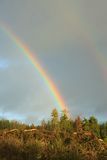 Rainbow and forest landscape Stock Image