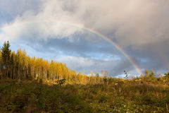 Rainbow and forest landscape Stock Images