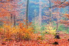 Rainbow forest Stock Images