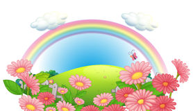 A rainbow and a garden of flowers at the hills Royalty Free Stock Photography