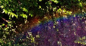 Rainbow in garden Royalty Free Stock Photo