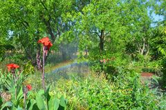 Rainbow in the garden royalty free stock photo
