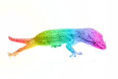 Rainbow gecko stock image