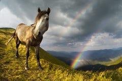 Rainbow horse around Royalty Free Stock Photos