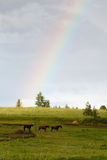 Rainbow and horses Stock Images