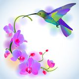 Rainbow humming-bird with violet orchids Stock Images
