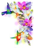 Rainbow humming-bird with violet orchids Stock Photo