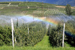 Rainbow by irrigation of an apple orchard, Italy Stock Images