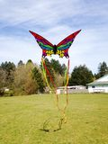 Rainbow kite Stock Images