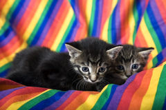 Rainbow Kittens. Three week old tabby kittens in rainbow chair. Focus on first kitten royalty free stock images