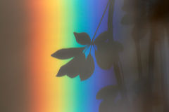 Rainbow Leaf Royalty Free Stock Photography