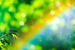 Rainbow and leaves of pear on abstract blurred background Royalty Free Stock Image