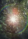Rainbow light lens flare on an apple tree Stock Photos
