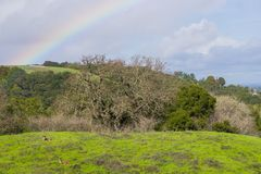Rainbow after a light rain and deer resting on the hills of Rancho San Antonio county park, south San Francisco bay, California stock image