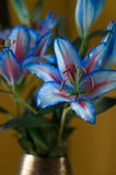 Rainbow lilies in vase. On gold background Royalty Free Stock Images