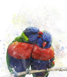 Rainbow Lorikeet Parrots Royalty Free Stock Photos