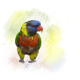 Rainbow Lorikeet watercolor Royalty Free Stock Photo